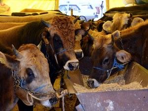 Canlı hayvan ihracatı 2 katına çıktı