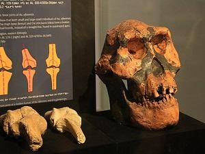Etiyopya'da 3,2 milyon yıllık insansı fosili: Lucy