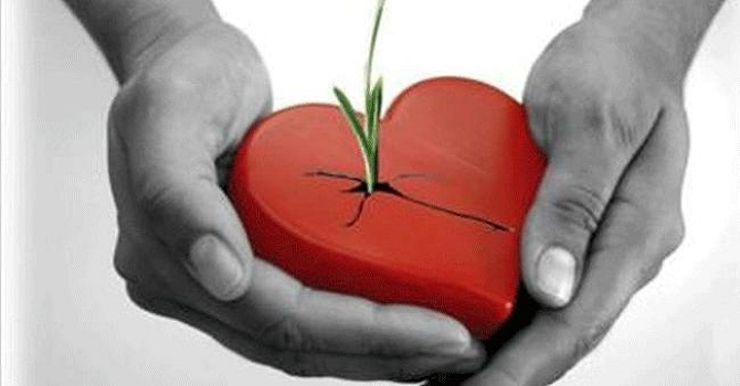 Organ nakli sayısı 12 yılda 6 kat arttı