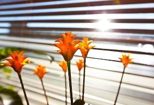 Sabah namazına kalkanlar şanslı: Güneşi hisseden...