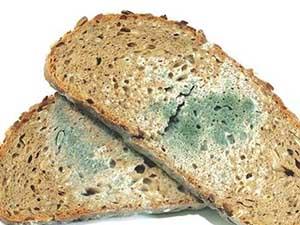 Küflü ekmek, meyve, sebze, peynir, reçel yenir mi?