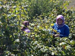 'Fındıkta 10 bin mevsimlik işçiye ihtiyaç var'