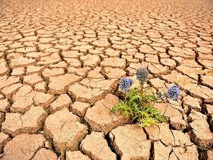 Endonezya kuraklıkla mücadele ediyor