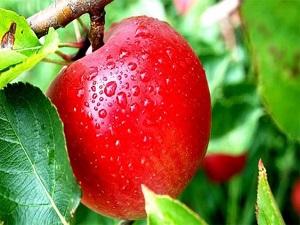 Organik gıda daha mı besleyici?