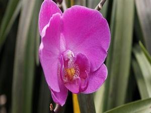 Orkidenin zerafeti ölümsüzleşti