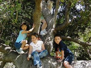 Ağaca tırmanmak hafızayı güçlendirebilir
