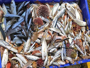 Ege'de yasa dışı balıkçılık iddiası