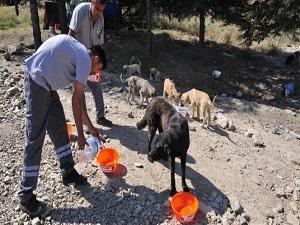 Sokak hayvanlarına bir kap su