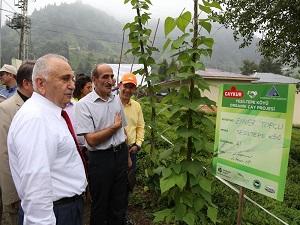 Organik çay tarımı projesi