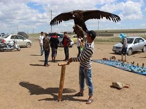 Evcilleştirilmiş kartallar Moğolistan turizmine katkı sağlıyor