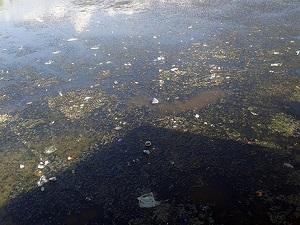 Van Gölü çöpten geçilmiyor