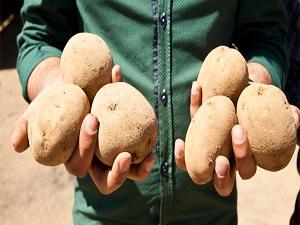 Van'da patates üretimi için çağrı