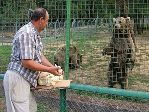 Koruma altındaki boz ayılar yıllık 250 bin liraya besleniyor