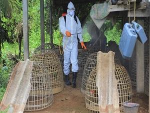 Ebola salgınında bir ilk