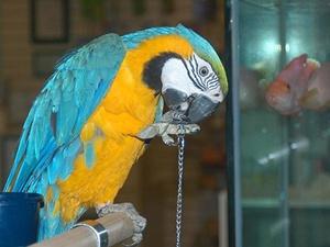 Hindistan'da papağan 'gözaltına alındı'