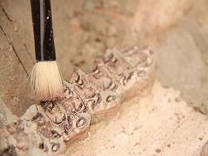 Çankırı'da 8 milyon yıllık fosillere ulaşıldı