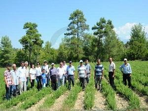 Türkiye aromatik bitkilerden yıllık 100 milyon dolar gelir sağlıyor