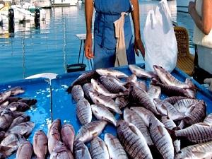 En zehirli 6 balık