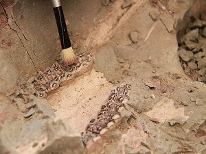 Çankırı'nın 8 milyon yıllık fosilleri Avrupa'da tanıtılacak