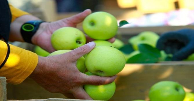 Elma fiyatlarında artış bekleniyor