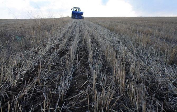 Yozgat'ta toprak işlemesiz yem bitkisi ekimi yapıldı