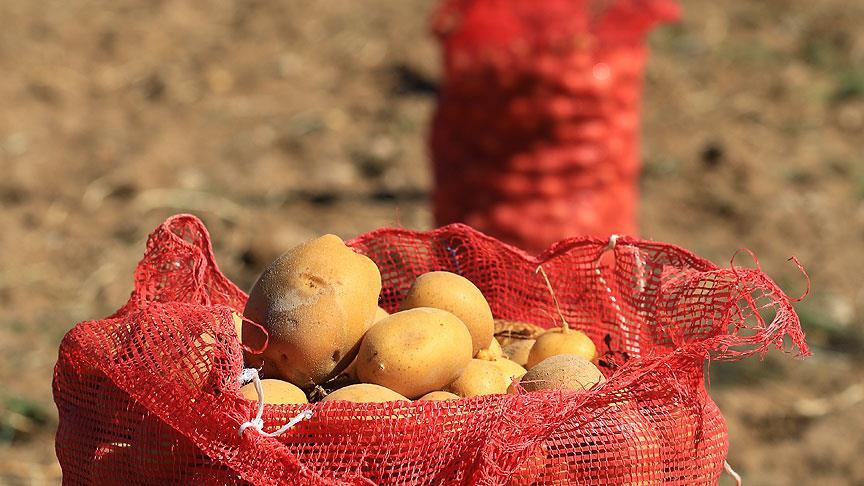 Patates soğan hediyesi evlilik bitirdi!