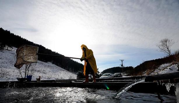 Sarıkamışlı balık üreticilerinin soğukla imtihanı