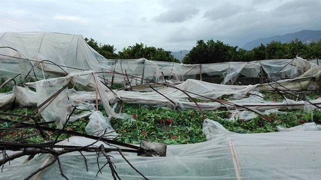 Antalya'lı çiftçilerin zararı karşılanacak