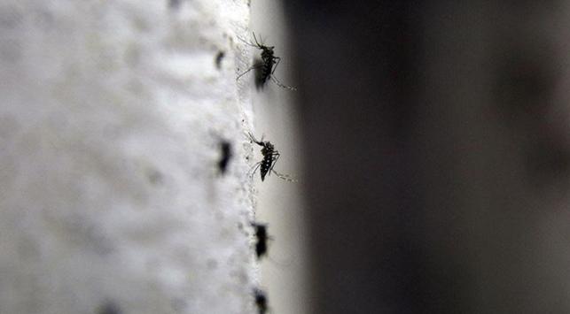 Zika virüsüne Endonezya'da da rastlandı