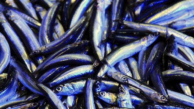 Balık yaşlanmayı geciktiriyor