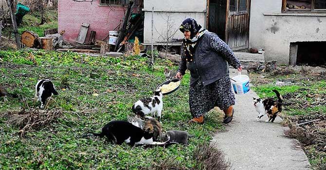 'Kediler aç kalır' diye köyden ayrılmıyor