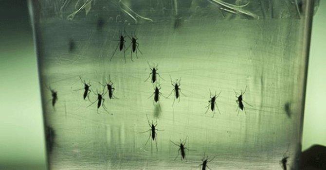100'den fazla kişi Zika'dan öldü