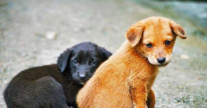 'İsraf değil mama olsun' projesiyle hayvan barınağına yiyecek desteği