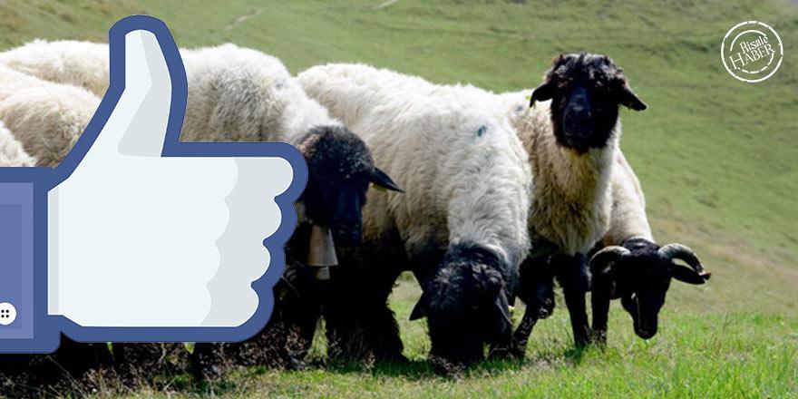 Sosyal medya dini bayramların maneviyatını zedeledi