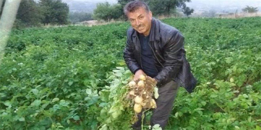 Türkiye'nin ilk 'beyaz patates' hasadı yapılacak