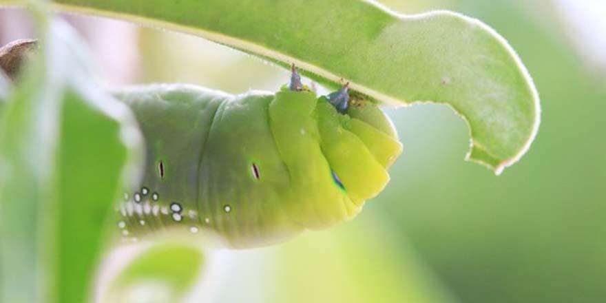 Bitkilere verilen bir savunma sistemi daha keşfedildi
