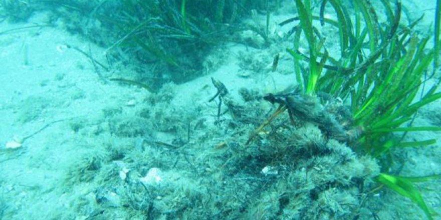 Akdeniz'in dibi çölleşiyor