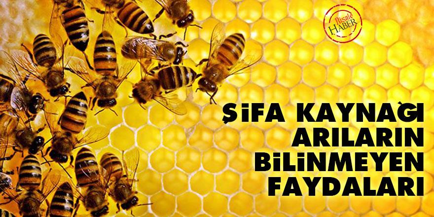 Şifa kaynağı arıların bilinmeyen faydaları