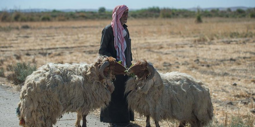 'Fırat Kalkanı Harekatı' Suriyeli çobanlara da nefes aldırdı