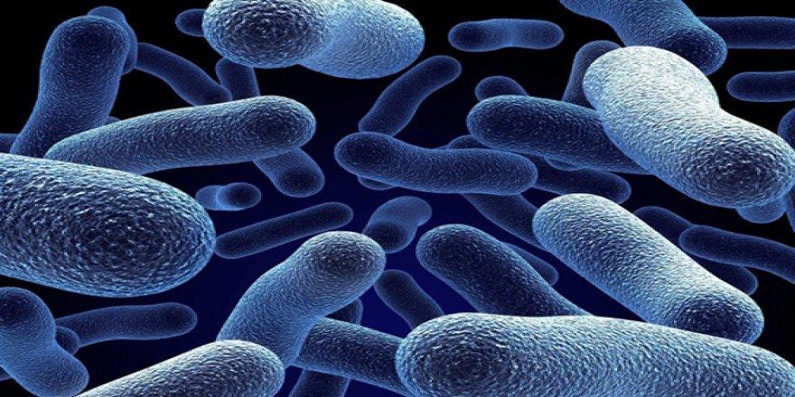 Subhanallah! 11 bin metre çukurda petrol yiyen bakteriler keşfedildi