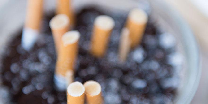 Sigara izmaritleri bitkilerin büyümesini olumsuz etkiliyor