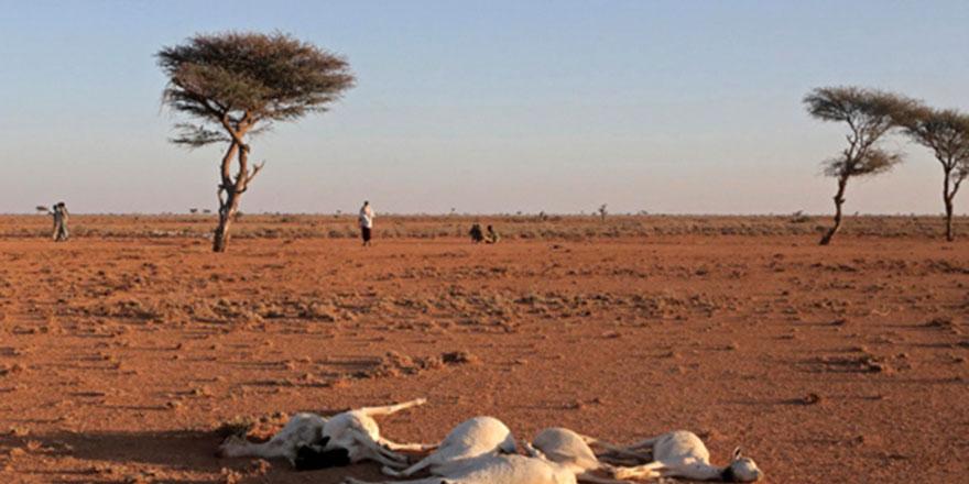 Kenya'da kuraklık açlığı getirdi