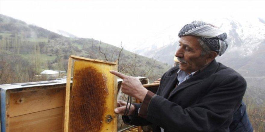 Türkiye'de 40 bin aile geçimini arıcılıktan sağlıyor
