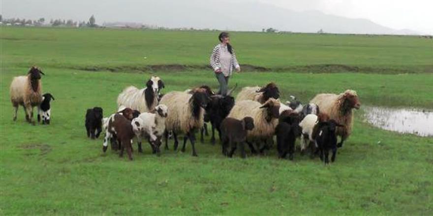 Hem çobanlık yaptılar hem TEOG birincisi oldular