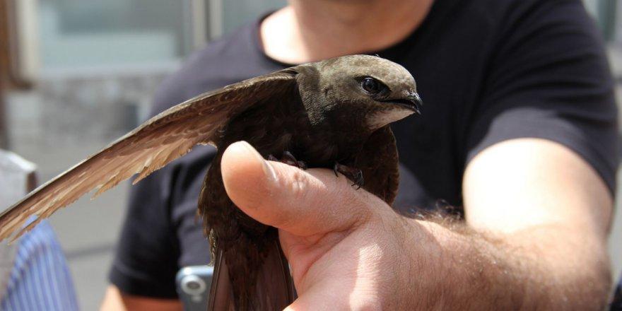 Kur'an-ı Kerim'de adı geçen kuş Türkiye'de bulundu