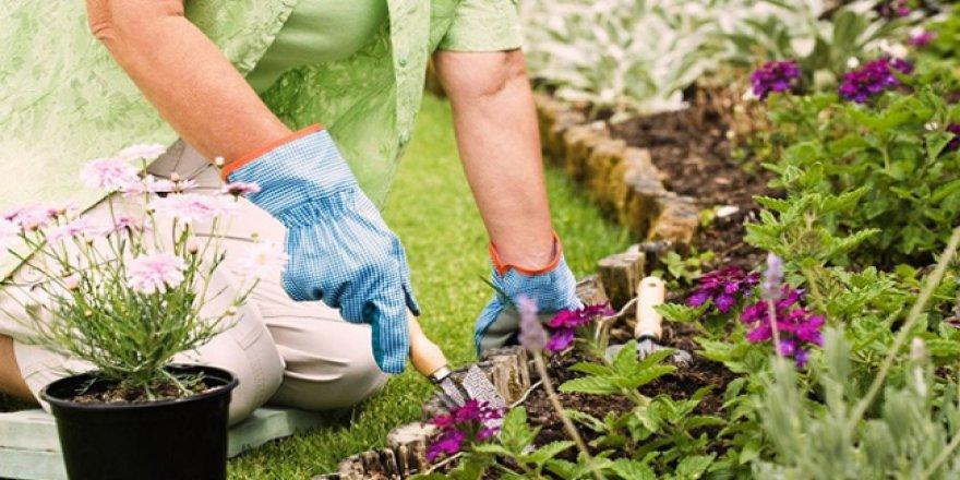 Süs bitkisi yetiştiricilerine müjde