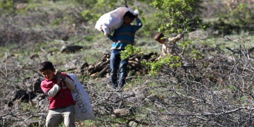 Fındık işçileri sigortalı oluyor