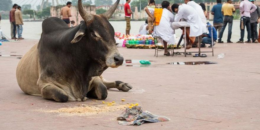 Hindistan'da inek eti yedi diye iki kişiyi linç ettiler