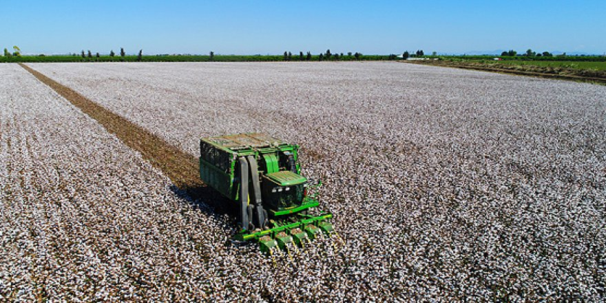 Pamuk fiyatları son bir yılda yüzde 26 oranında geriledi