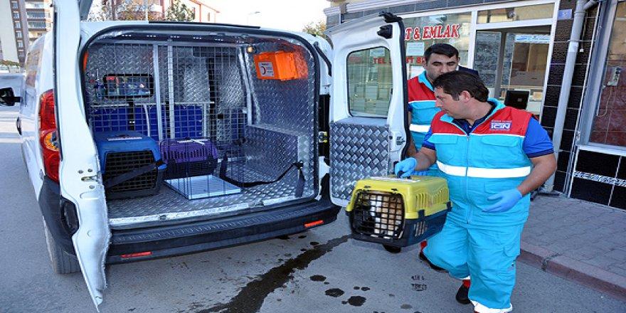'Kısırlaştırılmamış hayvanın ticareti yapılamayacak'